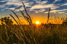 20 августа в Пензенской области ожидается 30-градусная жара