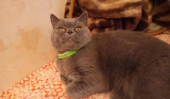 Кошку, которая «лечит похмелье и дружит с домовым», хотят продать за 15 млн