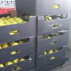 В Пензенской области уничтожили около центнера свежих яблок