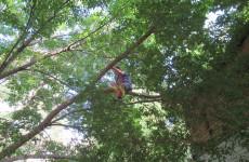 «Высоко сижу...»: пензенские спасатели сняли ребенка с дерева