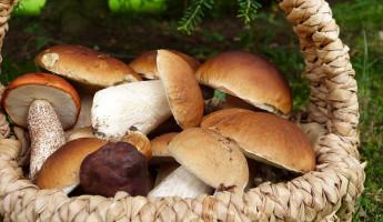 В Пензенской области пропал пожилой грибник