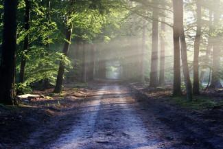 В Пензенской области дедушка-грибник и его трехлетний внук нашлись в лесу...