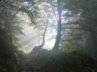 Завтра жителям Пензенской области пообещали туман
