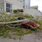 В Пензе сильный ветер повалил деревья на машины