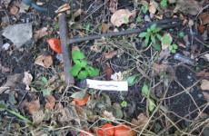 Обнародованы фотографии с места страшного убийства пензенца