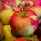 Под Пензой уничтожили около 70 килограммов свежих яблок