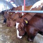 Пензенская область - лидер ПФО по производству мяса