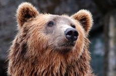 В Якутии медведь убил экс-депутата