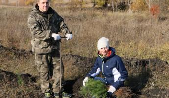 Этой осенью в Пензенской области посадят 400 тысяч сосен