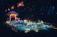 В Пензе детям из малообеспеченных семей подарят билеты в цирк