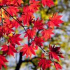 12 октября в Пензенской области потеплеет до +14ºС