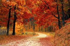 Какая погода ожидает пензенцев 17 октября?