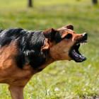 Стая собак разорвала старушку, пришедшую на могилу своего пекинеса