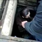 Загадочная пропажа в Леонидовке. Из погреба раздался крик...