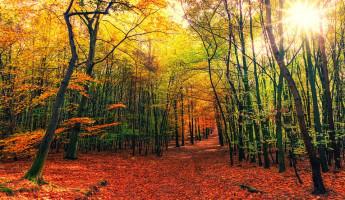 22 октября в Пензенской области воздух прогреется до +16ºС