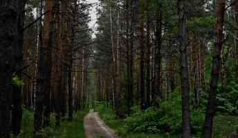 В Пензенской области нашли заблудившуюся пару грибников