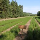В Пензенской области перевыполнили план по восстановлению лесов