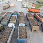 В Пензенской области собрали 2 млн тонн сахарной свеклы