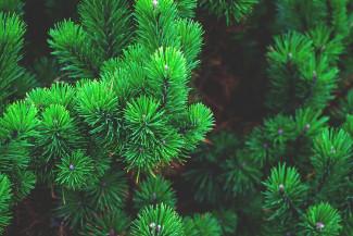 Стало известно, когда установят главную новогоднюю елку в Пензе