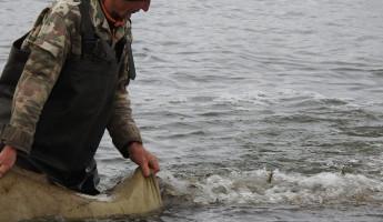 В Пензенское водохранилище выпустили около двух тонн рыбы