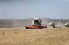 Пензенские аграрии собрали около 2 млн тонн зерна