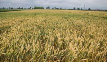Пензенские аграрии стали закупать больше удобрений