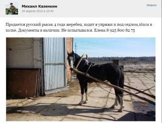 Бывшая жена пропавшего Казенкина избавляется от его бизнеса?