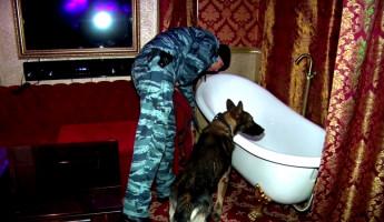 Пять лет разврата: почему правоохранители не обращали внимания на проституток в клубе «Барсук»?