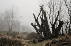 15 ноября в Пензенской области будет холодно и туманно