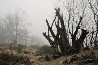 В понедельник пензенцам обещают туман