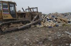 В Пензенской области под гусеницы бульдозера попали четыре тонны груш