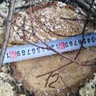 В Пензенской области браконьеры нарубили леса на 1,5 млн рублей