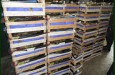 В Пензенской области около тонны груш пустили под гусеницы бульдозера