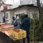 В Пензе закрыли несколько нелегальных елочных базаров