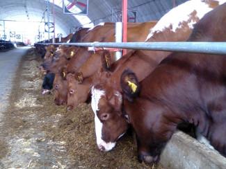 Пензенская область вошла в число регионов с наибольшим приростом молочной продуктивности