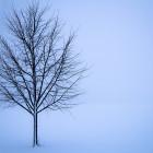 Какая погода ожидает пензенцев 18 января?