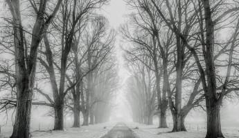 Мокрый снег и туман. Прогноз погоды на 19 января в Пензенской области
