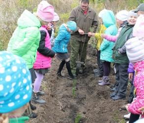 В Пензенской области около 12 тысяч деревьев посадили школьники