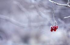 В понедельник пензенцев ожидает сильный ветер и снег