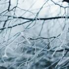 Какая погода ожидает пензенцев 29 января?