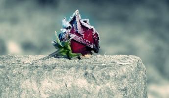 В Пензенской области рецидивист совершил гнусное преступление на кладбище