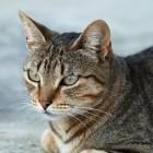 Жительница «Спутника»: «Девочка сбросила кошку с 8 этажа, а после добила животное»