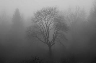 Пензенцев предупреждают о сильном тумане 22 февраля
