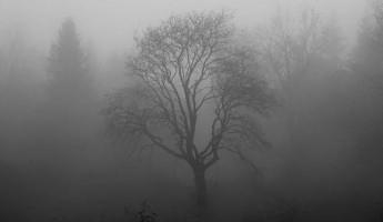 Пензенцев предупреждают о сильном тумане 29 февраля