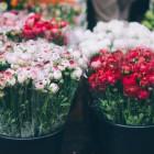 Стало известно, когда откроются цветочные ярмарки в Пензе