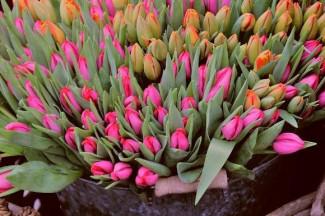 В Пензе открылись цветочные ярмарки