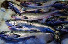 В Пензенской области забраковали более полутонны подозрительной рыбы