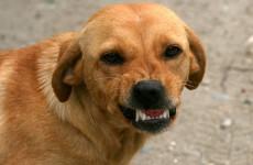 Нападением собаки на ребенка заинтересовался пензенский Следком