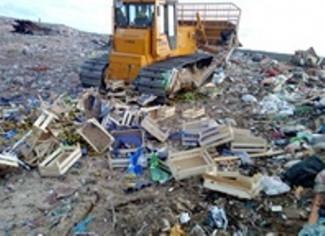 Под Пензой более двух тонн груш пустили под гусеницы бульдозера