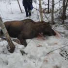 В Пензе открыт сезон охоты на браконьеров